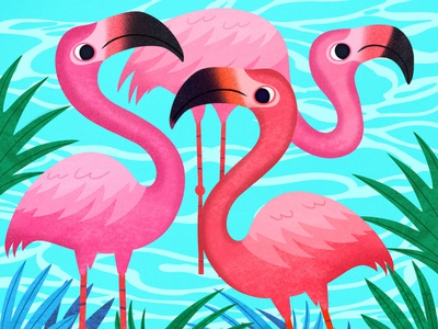 Flamingos © Nicole Wilson 2019. animals kid lit digital art editorial childrens books graphic art illustrator editorial illustration nicole wilson illustration
