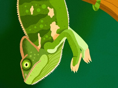 Chameleon animals design colorful digital art editorial childrens books graphic art illustrator editorial illustration nicole wilson illustration