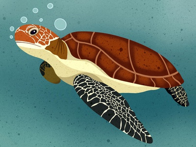 Sea Turtle digital art design editorial childrens books editorial illustration nicole wilson icon illustrator animal illustration animals animal sea turtle