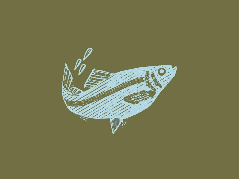 Alewife rva virginia richmond east coast seafood water woodcut illustration alewife fish logo