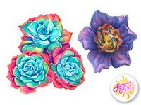 Echiveria and rainbow gardenia