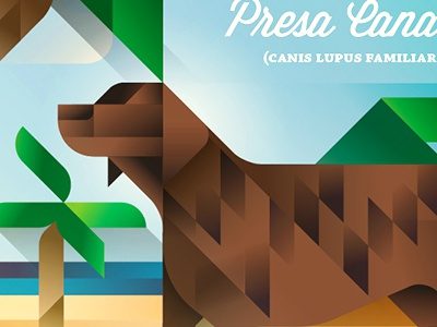 Presa Canario - Gran Canaria