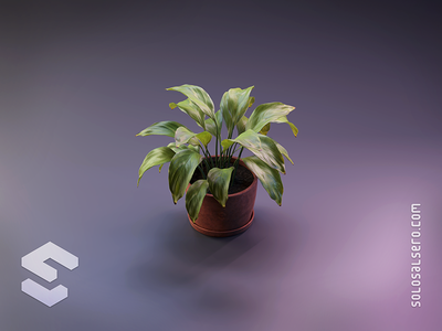 Plant pot green plant 3d object isometric cinema4d c4d blender graphicdesign icon design solosalsero