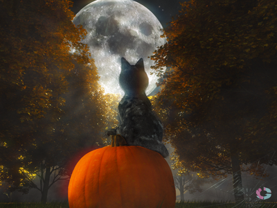 Cat sitting on a pumpking in a spookiy forest