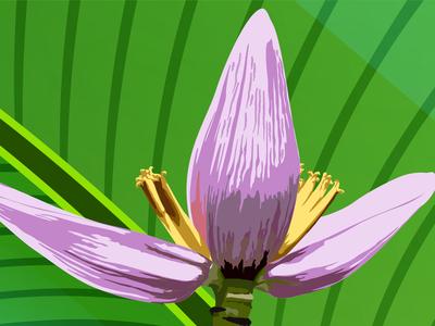 Blossom Vector Illustration