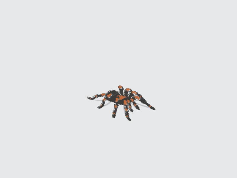 Spider arachnid illustrations illustrator scribble tarantula spider illustration vector design