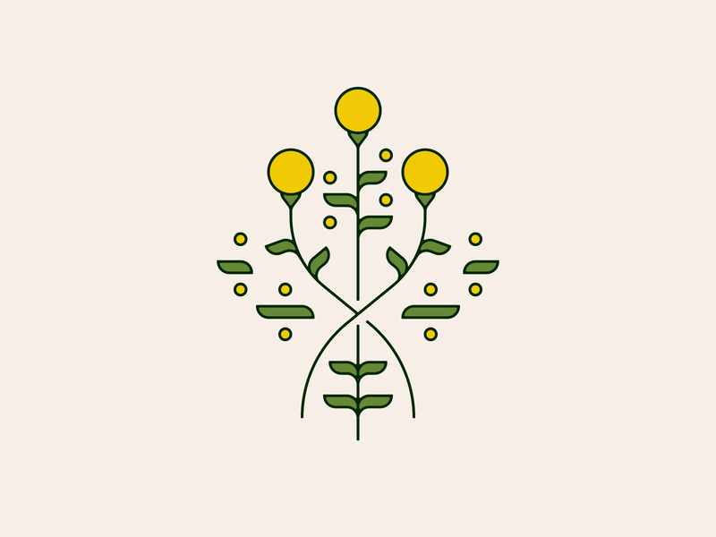 billy buttons craspedia billybuttons flower flowers illustration