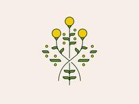 billy buttons craspedia billybuttons flower flowers illustration