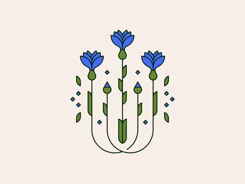cornflower flower illustration flower cornflower illustration
