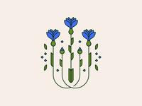 cornflower flower illustration flower cornflower illustration