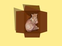 Cat loves Box