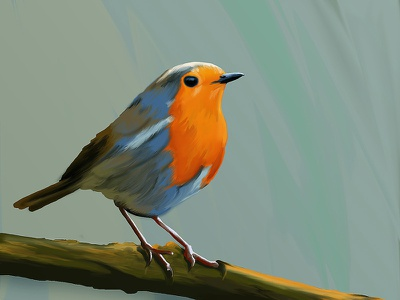 Robin 🐦 pajaro animal nature technique bird robin brushes photoshop adobe design illustration