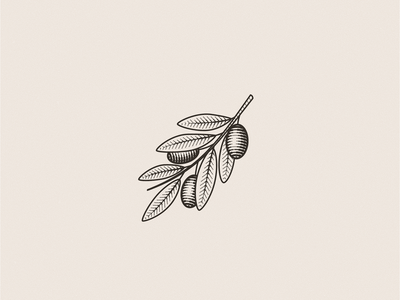 Olive Branch organic nature design branch olive engraving flat illustration vector identity icon