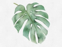 Monstera numeric painting free course exotic leaf tropical leaf digital art procreate brushes watercolor watercolour tutorial procreate monstera