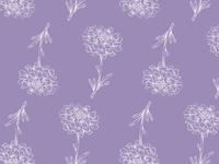 Iberis Flower Pattern