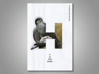 H is for Hawk Book Cover