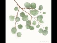 Eucalyptus Watercolor & Print