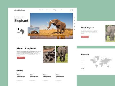 Animals Discover