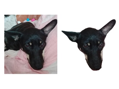 Pet Photo into Vector Art pet draw design poligon love animals black dog high poly low poly vector adobe illustrator