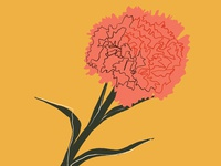 Hannah Warren 'Chrysanthemum'
