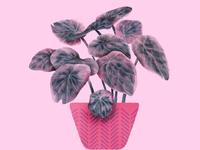 Planters VS Plants 015