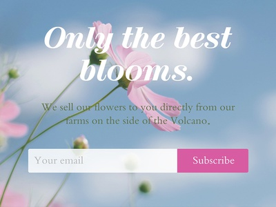 Day 026 - subscribe - daily ui flat website branding web type clean simple pink plant bloom subscribe form flowers green ux design freelance designer typography ui 100 daily ui 100 day project