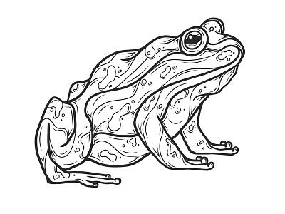 Frog man ribbit hop warts nature amphibian toad frogs frog