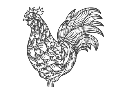 Vector Lines gobble beak wings talons bird feathers chicken rooster