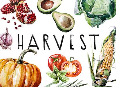 H A R V E S T  food vegetables brush illustration watercolor