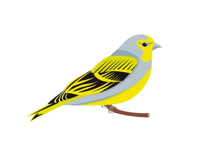 Zitronenzeisig wild life vector illustration bird songbird finch citril finch zitronenzeisig alps