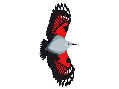 Mauerläufer wild life vector illustration bird passerine wallcreeper mauerläufer alps