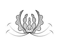 Zimbabwe Flame Lily