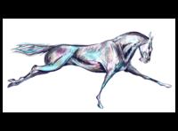 Splash of Color in Horses 🐎