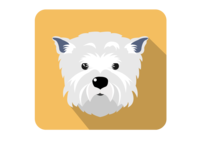 Cheda the doggy dog