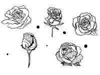 Roses Illustrations 1
