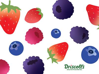 Berry2 2019 vector graphic artist design illustration branding