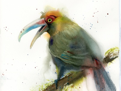 Green-billed toucan - watercolor painting