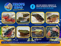 Triops King Packaging Flier