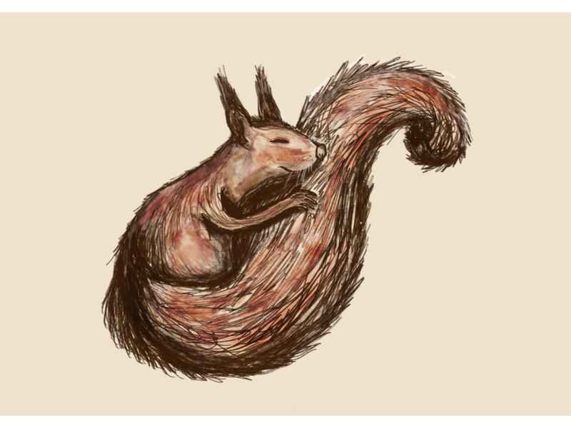 Sleeping Squirrel squirrel cute animal art children art procreate illustration dribbble