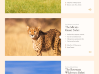 Safari Tour Cards