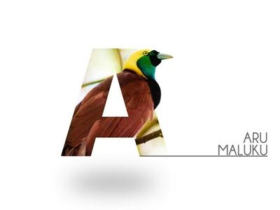 Letter Portrait - Aru Maluku
