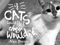 I am Not a Cat Hater...