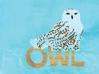 Snowy owl drawing