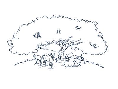 Ilustração Vetorial - Tradição Vilela