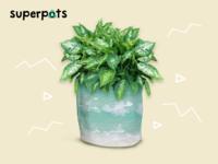 Plantido Superpots #2