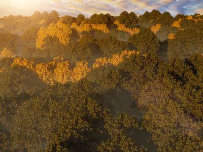 CGI Forest modeling animated 3d motion graphics animation music video filmmaking vfx blender after effects climate change pollution earth planet forrest cgi nature