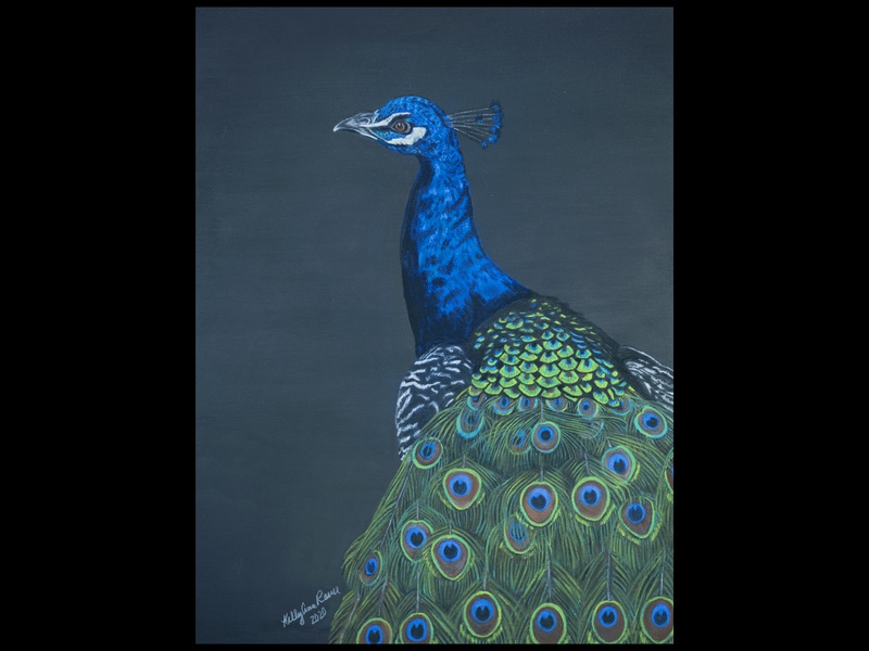 Hand Drawn Peacock handdrawn birds pastels chalks green blue peacock pastel fineart