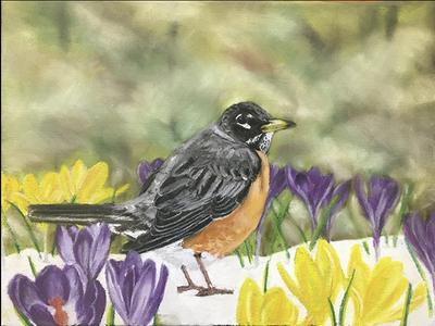Spring Robin handdrawn painting drawing fineart pastelartist flowers crocus birds robin spring