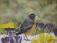 Spring Robin  (Finished)
