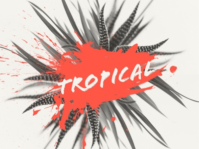 Tropical — Design Template nature plant trendy design splash color trendy trend instadesign instagram visual art poster design typography social summer digital post illustration visual design visual